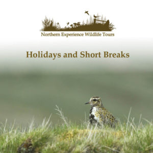Northern Experience Wildlife Tours