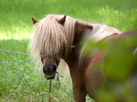 Stepney Bank Stables – Inner City Equestrian Centre